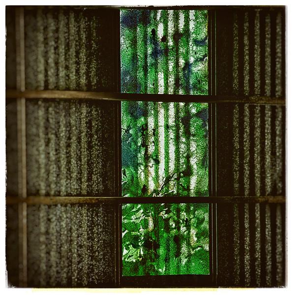 Leaves swaying in the wind II