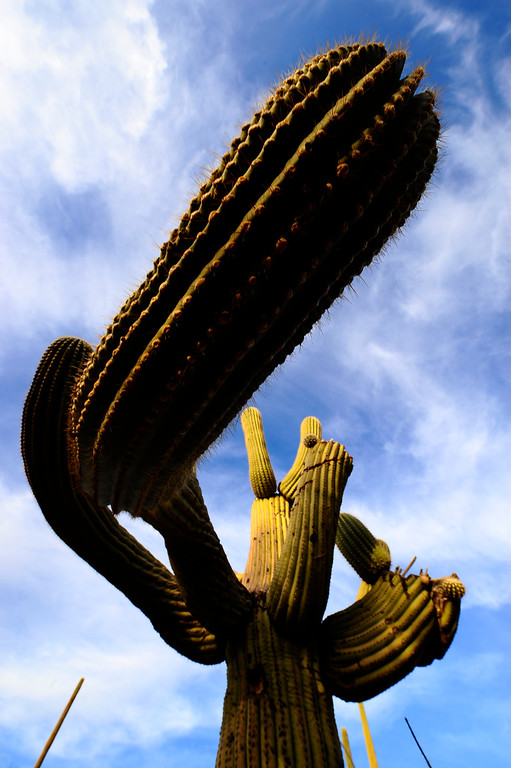 This image was captured during a private workshop on 1/08/2010 at Saguaro National Park. This is one of the several places to choose from for workshops 4-hours or longer. The longer the workshop the more locations you can choose.