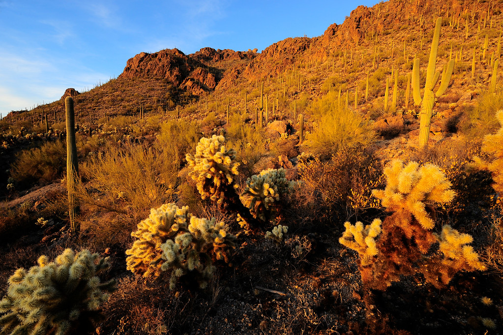 This final image was capture during a private workshop on 3/10/10 in Saguaro National Park during sunset.