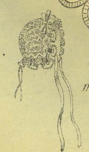PMnov186510