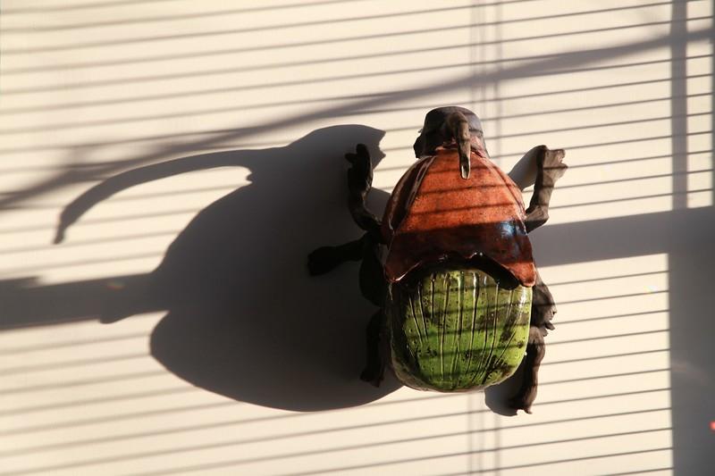 Dung Beetle. (D0359).