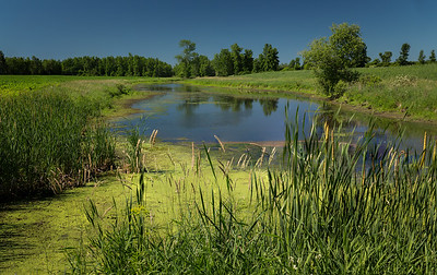 Pond on Road to Mainville