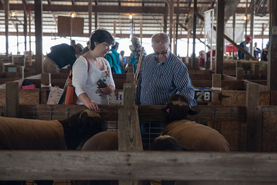 3 May 2014, Sheep Shearing Festival at Howard County Fairgrounds