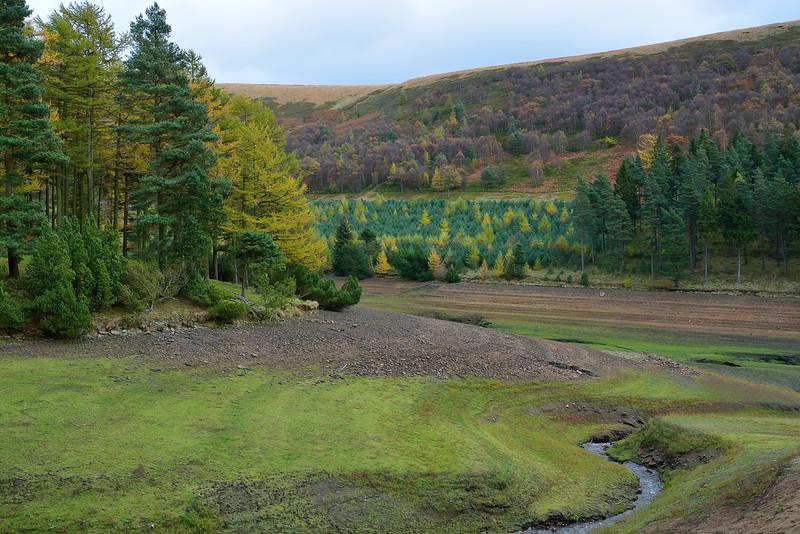 Upper Wood