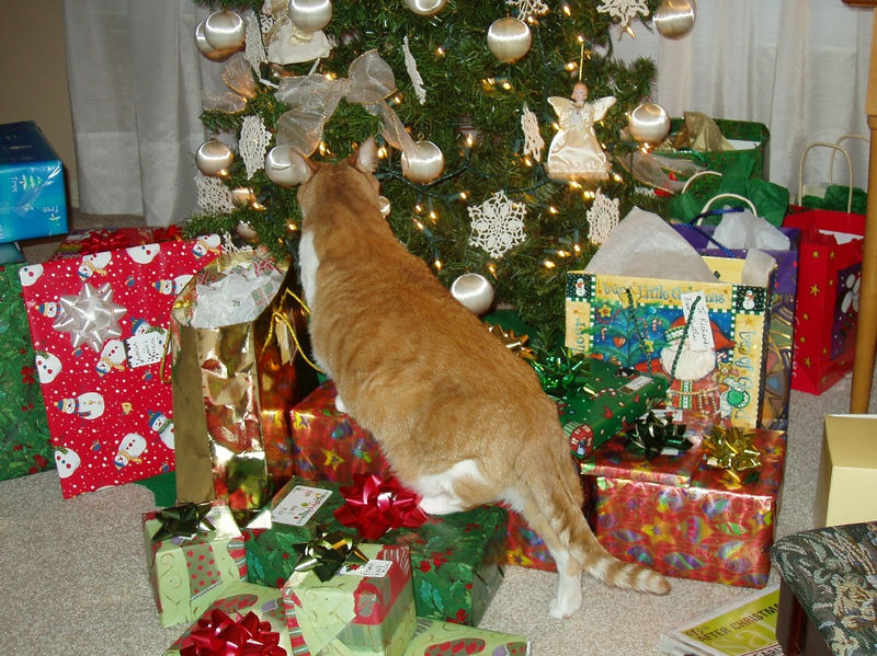 Christmas at mom's and crawling on presents