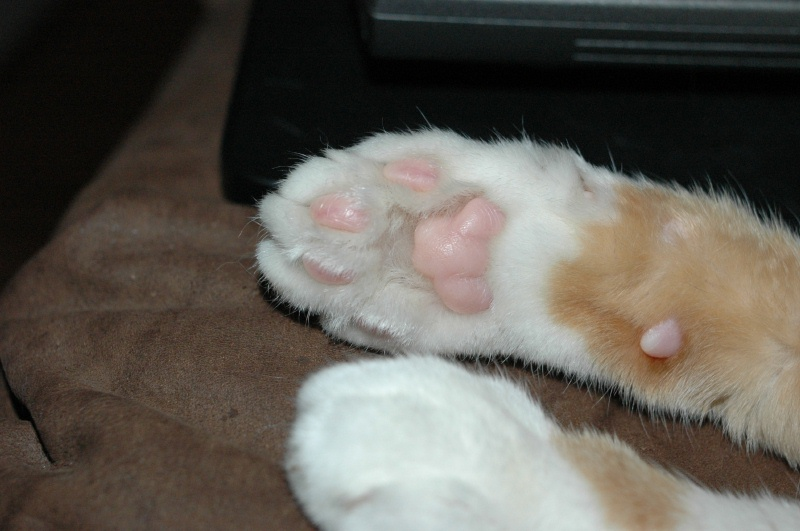 Nov 13, 2005 - her cute paw
