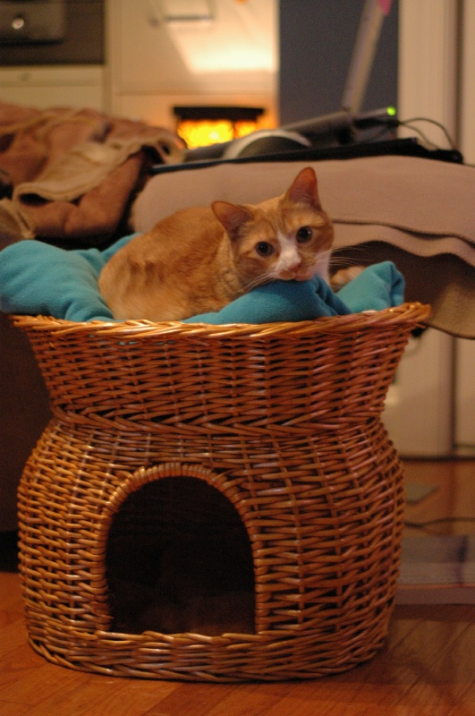 Jan 2005, Shelby's new basket next to my recliner