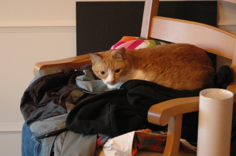Aug 2005, a new spot to lay - on a pile of momma's coats