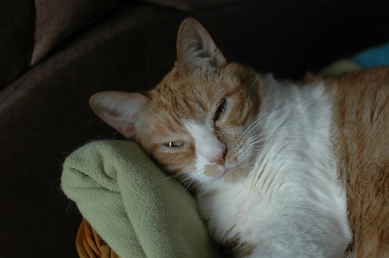 May 2005, sleepy kitty