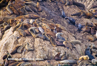 HAREM OF SEA LIONS (See No. 2910 at bottom right?)
