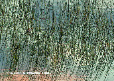 PATTERN OF REFLECTED REEDS ON A LAKESHORE
