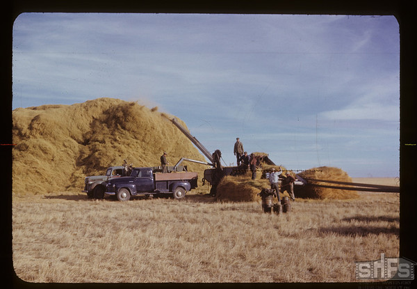 Lone Tree RM threshing crested wheat grass.  George Burns threshing & Jimmy Hirns buckracking - 175 loads in stack - more to follow. Canuck. 11/03/1950
