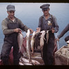Northern lake fish - Island Lake - fish in order - Whitefish - Jackfish - pickerel - sucker - maria and tulibee. Goodsoil.  08/18/1945