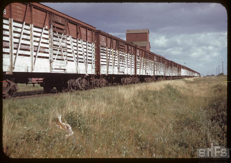 25 car stock train. Prince. 08/19/1944