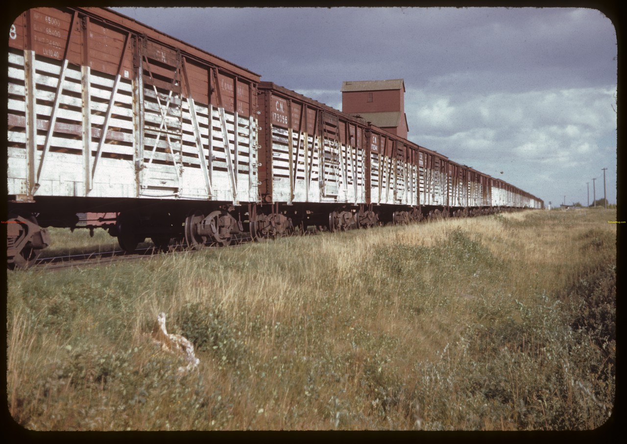 25 car stock train. Prince. 08/19/1944