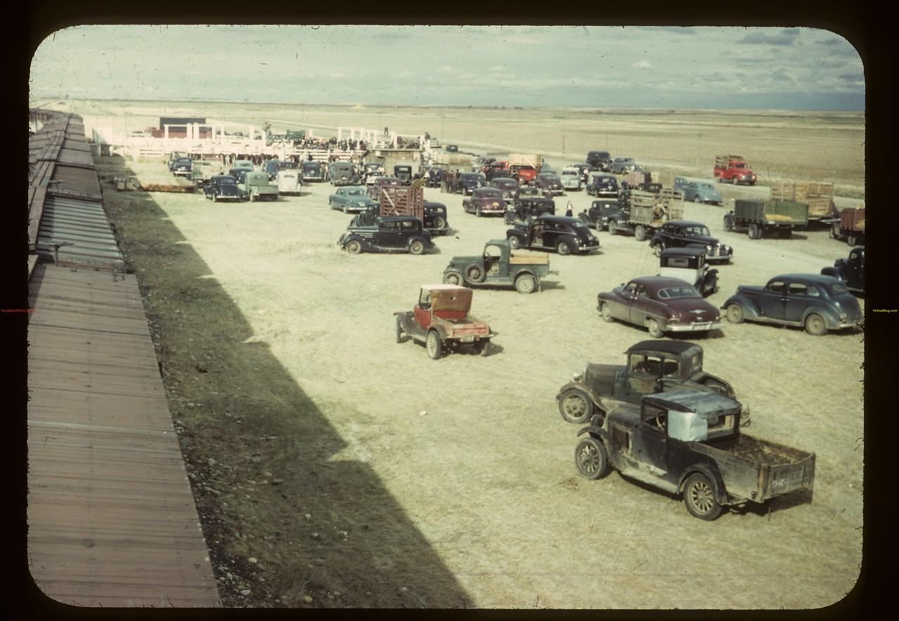 Consul's big day - Calf Club show and sale. Consul. 05/31/1949