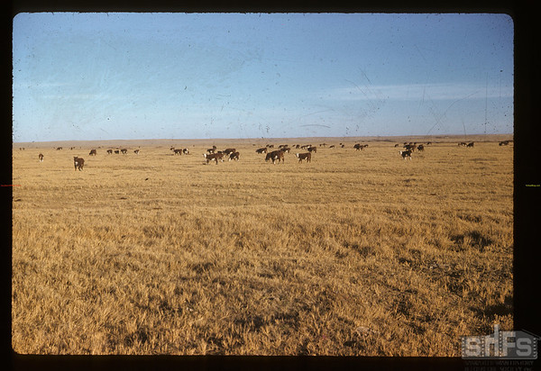 Range east of Maple Creek. Maple Creek. 10/31/1958