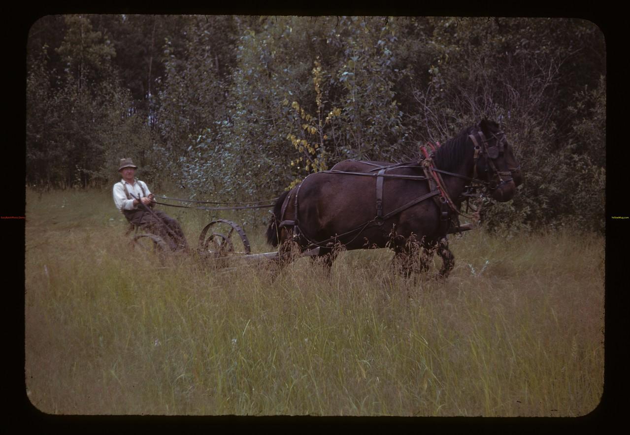 Gust Miller mowing. Medstead. 07/29/1944