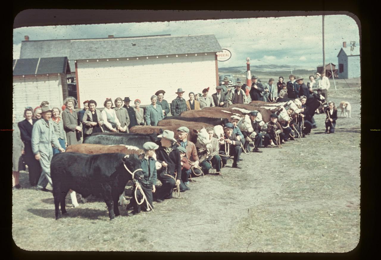 Iffley Jr. Calf Club [near North Battleford].Iffley.  05/19/1945