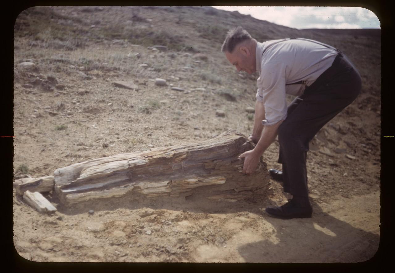Everett Baker lifting on petrified log. Eastend. 06/23/1949