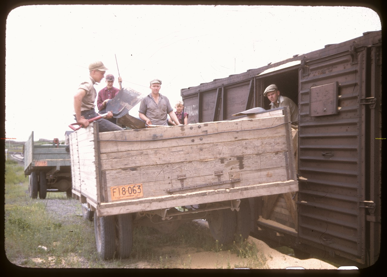 Shoveling grasshopper sawdust. Don Meinert is in the box car, while 2nd from right is Leon Meinert.  Instow. 	 06/20/1947