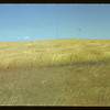 Wheat field. Climax. 08/28/1942