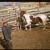 Gearge Scheuermann roping. Divide. 05/30/1956
