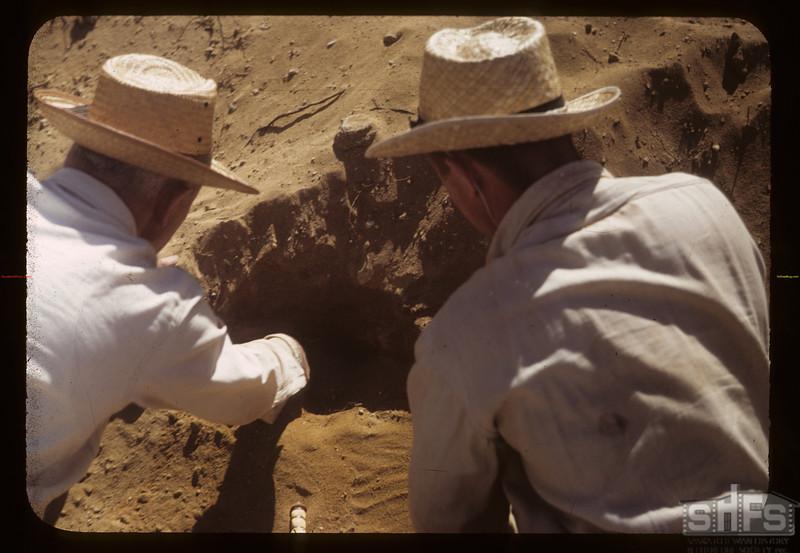 Professor Sternberg excavating with care. Eastend. 06/23/1949