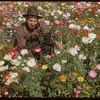 Otto Yunck in his flower garden. Shaunavon. 08/10/1952
