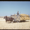 Sam Allan and Clydesdales [pulling hay rack]. Bracken. 10/21/1955