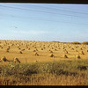 Stooks NE of Duck Lake. Duck Lake  09/24/1950