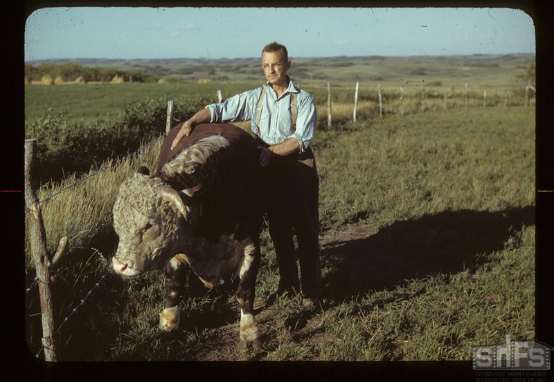 J. S. Palmer and Prize Registered Hereford. Marseden. 08/18/1942