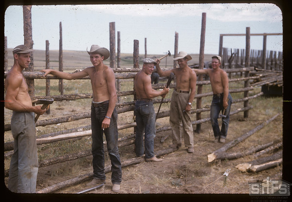 Well tanned shirtless section crew - building stockyards.  Mankota.07/30/1957