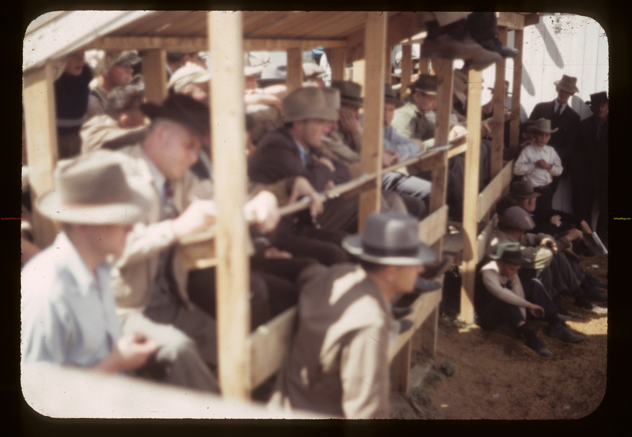 Buyer's stand - Fat Stock Show & Sale.Eastend. 06/01/1949