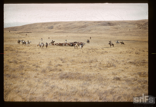 Finish of Reserve round-up. Maple Creek. 10/17/1960