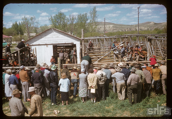 4-H show and sale. Eastend. 05/22/1957