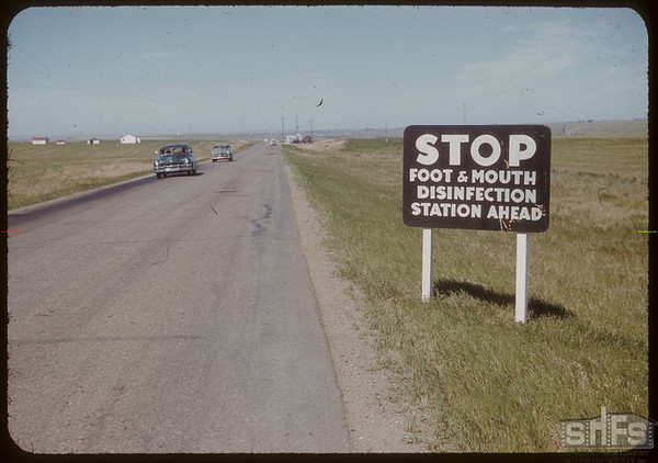 "Stop ""Foot & Mouth"" about 10 miles E. of Moose Jaw. 06/05/1952"