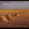 Sask. Grain Fields [stooks]. Lorlie. 09/04/1946