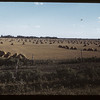 Parkland stooks & pasture lane - Springside to MacNutt.  09/01/1949