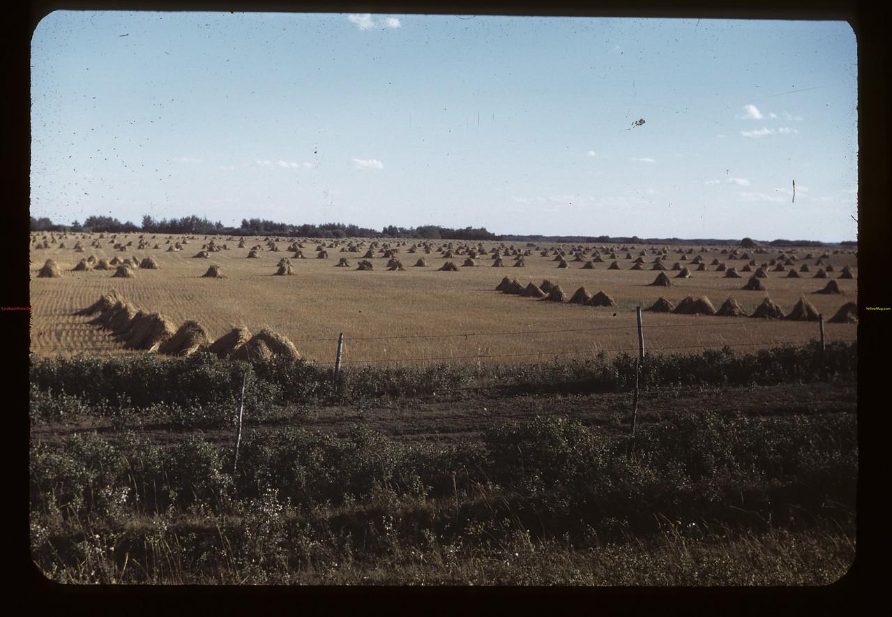Parkland stooks & pasture lane - Springside to MacNutt.  09/01/1949