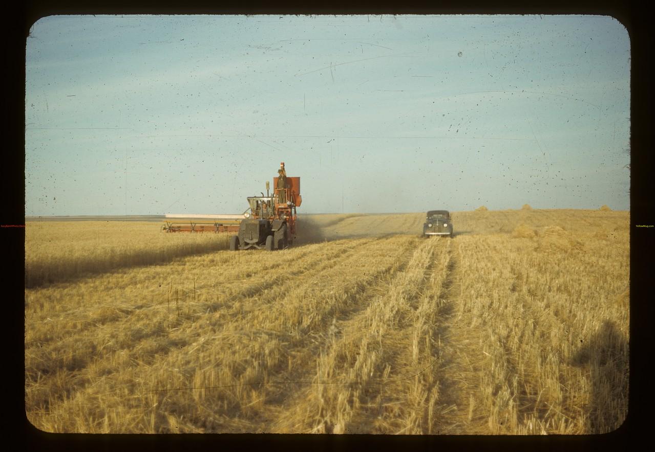D. J. McCuaig's harvest south of Eastend. Eastend. 08/28/1942