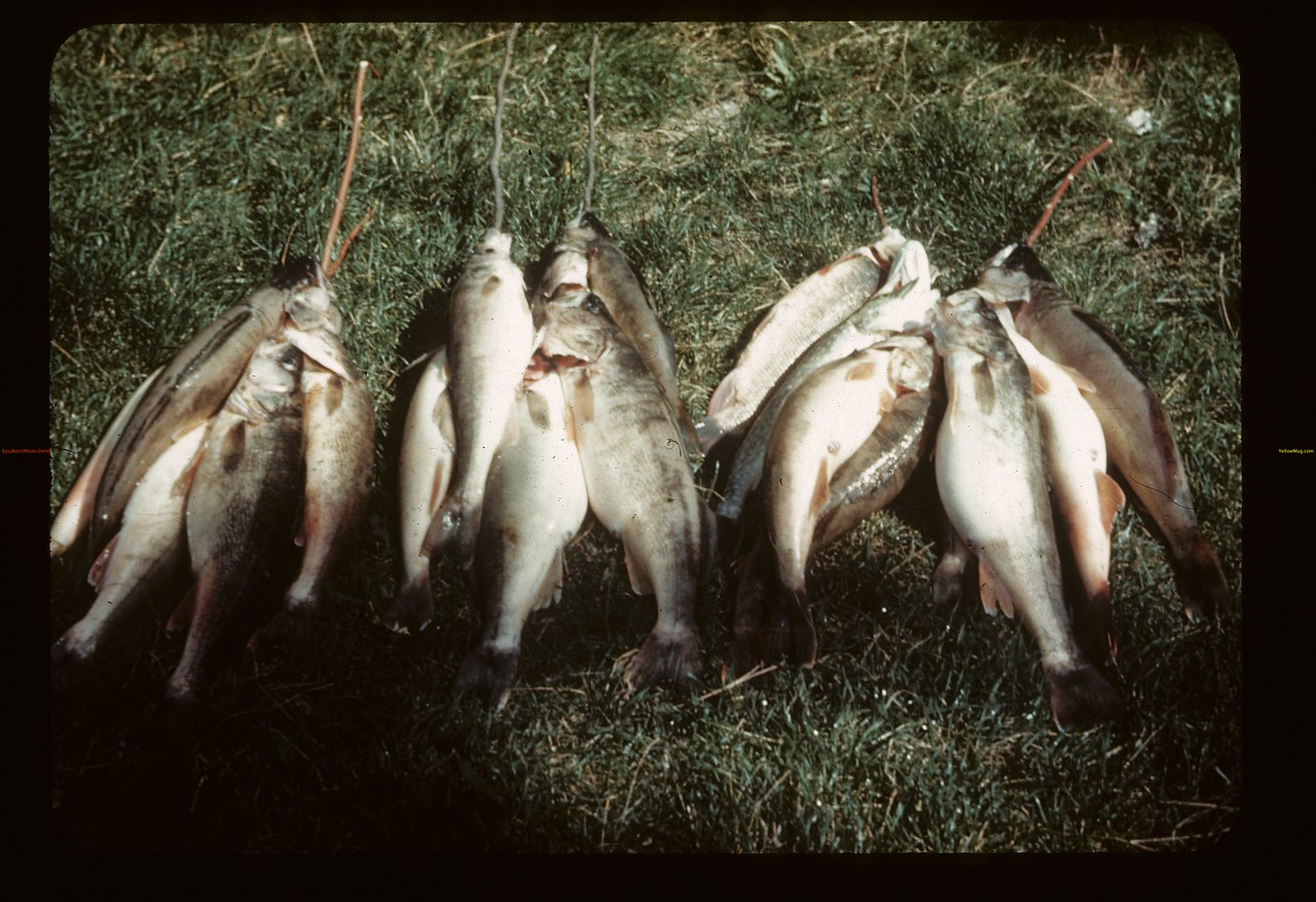 Commercial fishers - Pickerel @ 5 cents per pound. Loon Lake.  08/27/1944