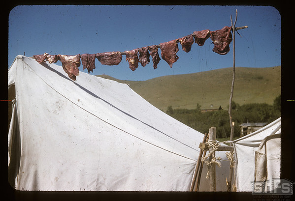 Meat hangs high for Soiux pow wow. Fort Qu'Appelle. 08/18/1957