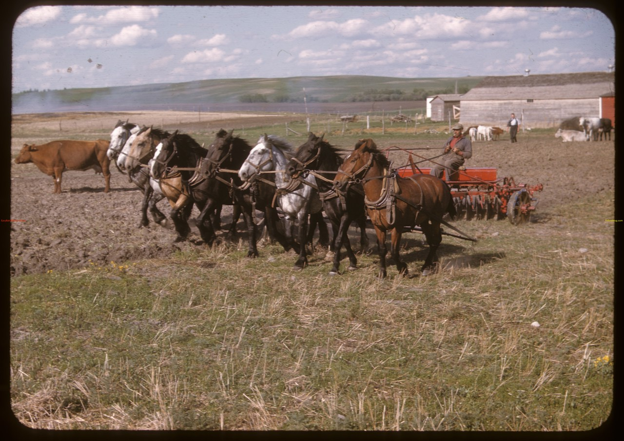 Rene Proulx and 8 horse One Way. Prudhomme 06/07/1947