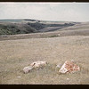 Acrhaeological tent camp in the distance - 6 miles south and 3 miles west of Gull Lake.  Gull Lake. 07/16/1960