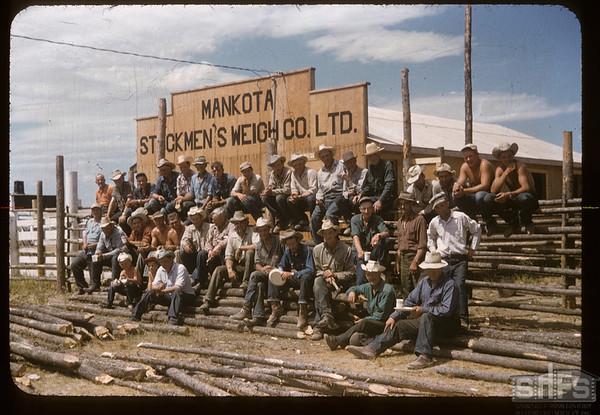 """We did it"" - building stockyards.  Mankota. 07/30/1957"