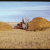 Jimmy Hirns buchracking RM of Lone Tree's crested wheat grass - 175 loads in stack - more to follow. Bracken.  11/03/1950