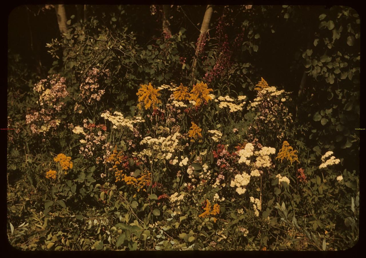 Wild Flowers. Unknown. 07/30/1940