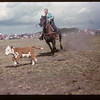 Murraydale rodeo - calf roping. Maple Creek. 07/08/1959