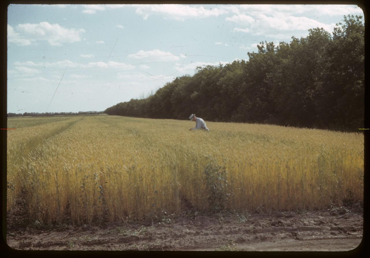 Charles Langdon at Dominion Experimental Farm. Scott 09/18/1942